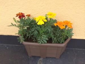 plants_011
