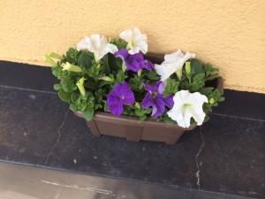 plants_012